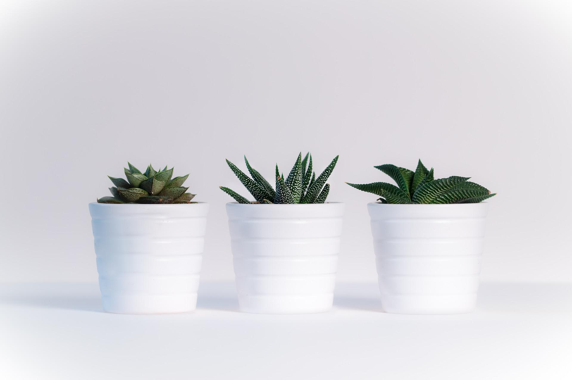 растения суккуленты в кашпо