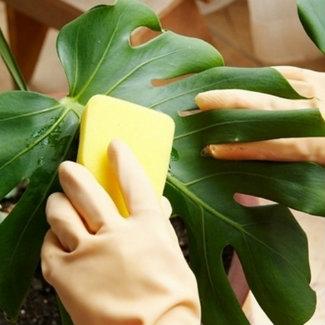 мытье листьев монстры