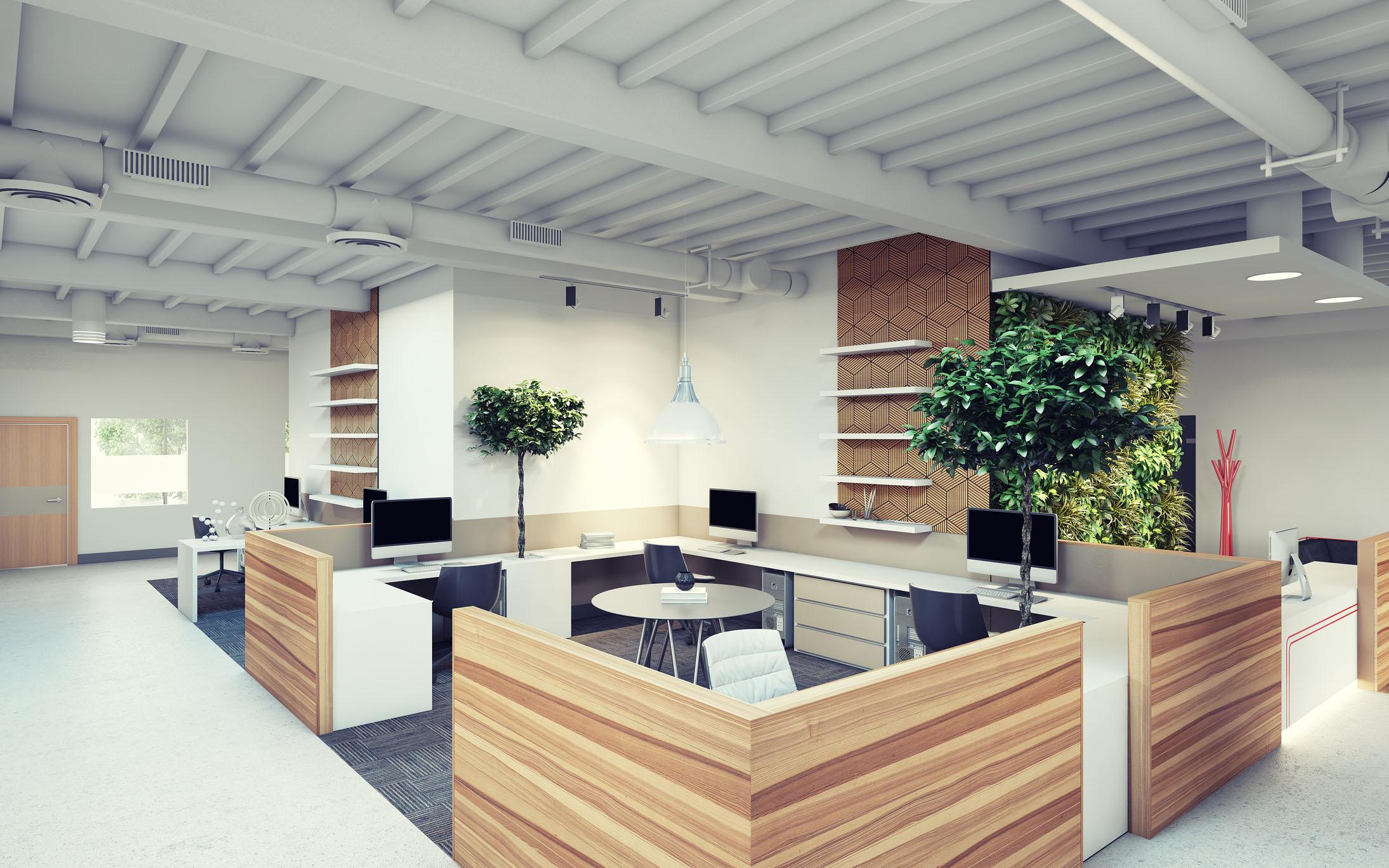 Офис белый с деревьями фикус