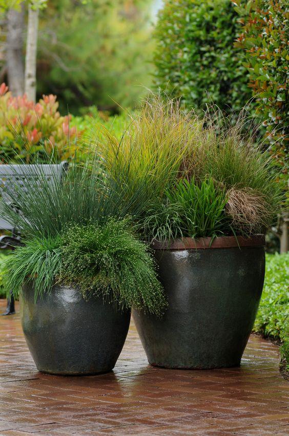 Растения в кашпо. Озеленение балконов и террас. контейнерное озеленение