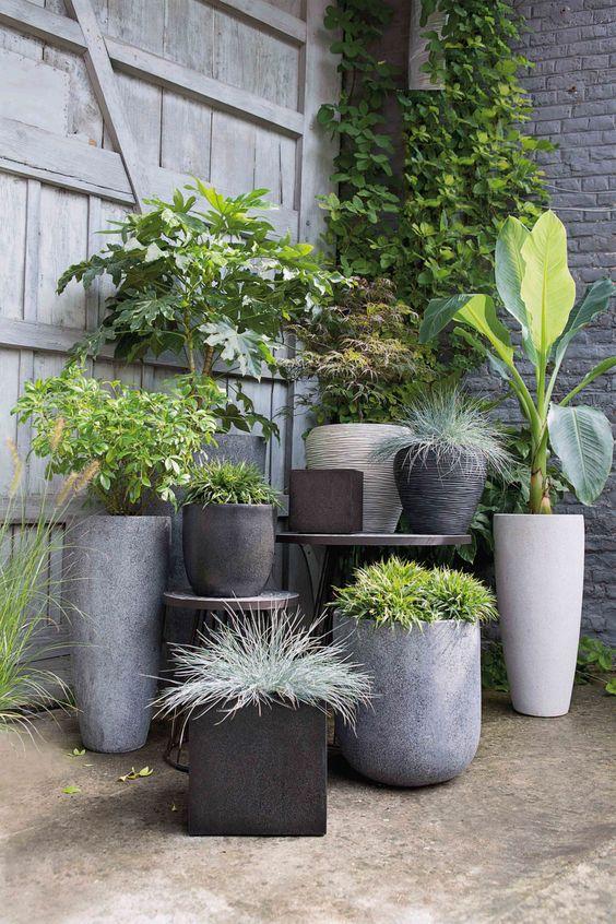 растения разные в кашпо на улице